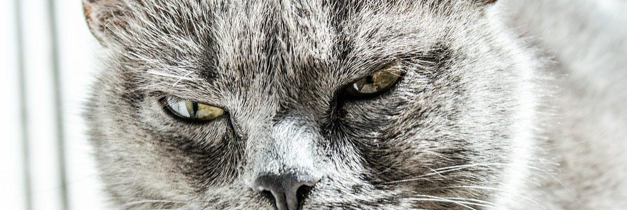 cat-334383_1280